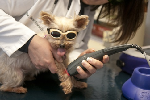 MetroPet Veterinary Clinic - Laser Therapy dog goggles