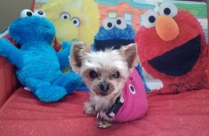 MetroPet Veterinary Clinic - About Us - Mascots - Gidget