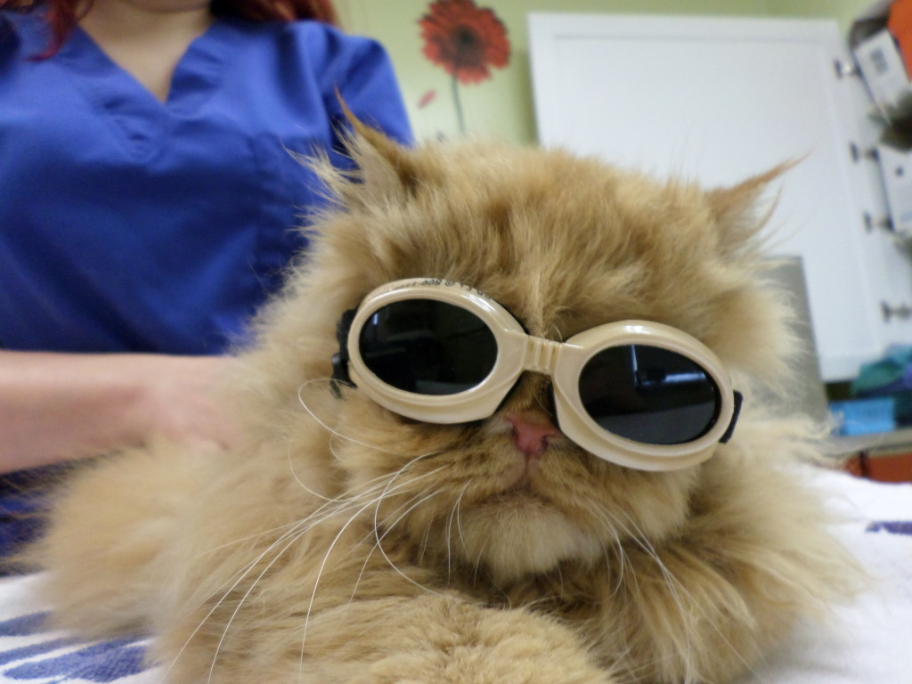 MetroPet Veterinary Clinic Hospital Tour - Laser Pain Therapy for Cats