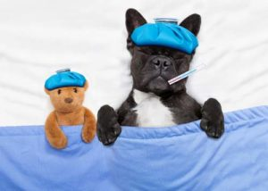 MetroPet-Vet-Clinic-Dog-Flu-What-You-Need-To-Know